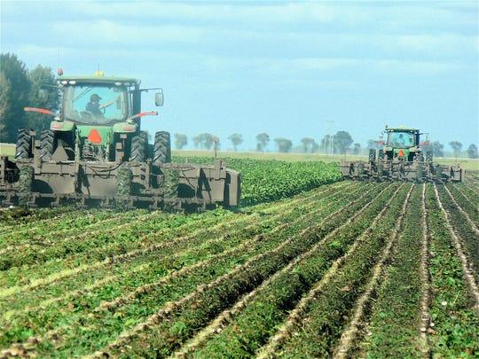 Machinery working in a sugar beet field in Minnesota.