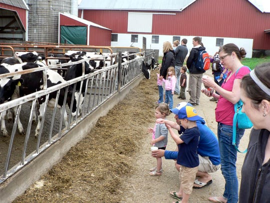 Consumers love cows and often view them as pets.