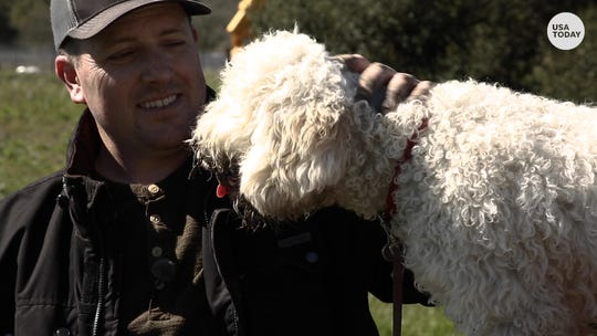 $1,000-a-pound delicacy: More U.S. farms grow pricey truffles with help from dogs