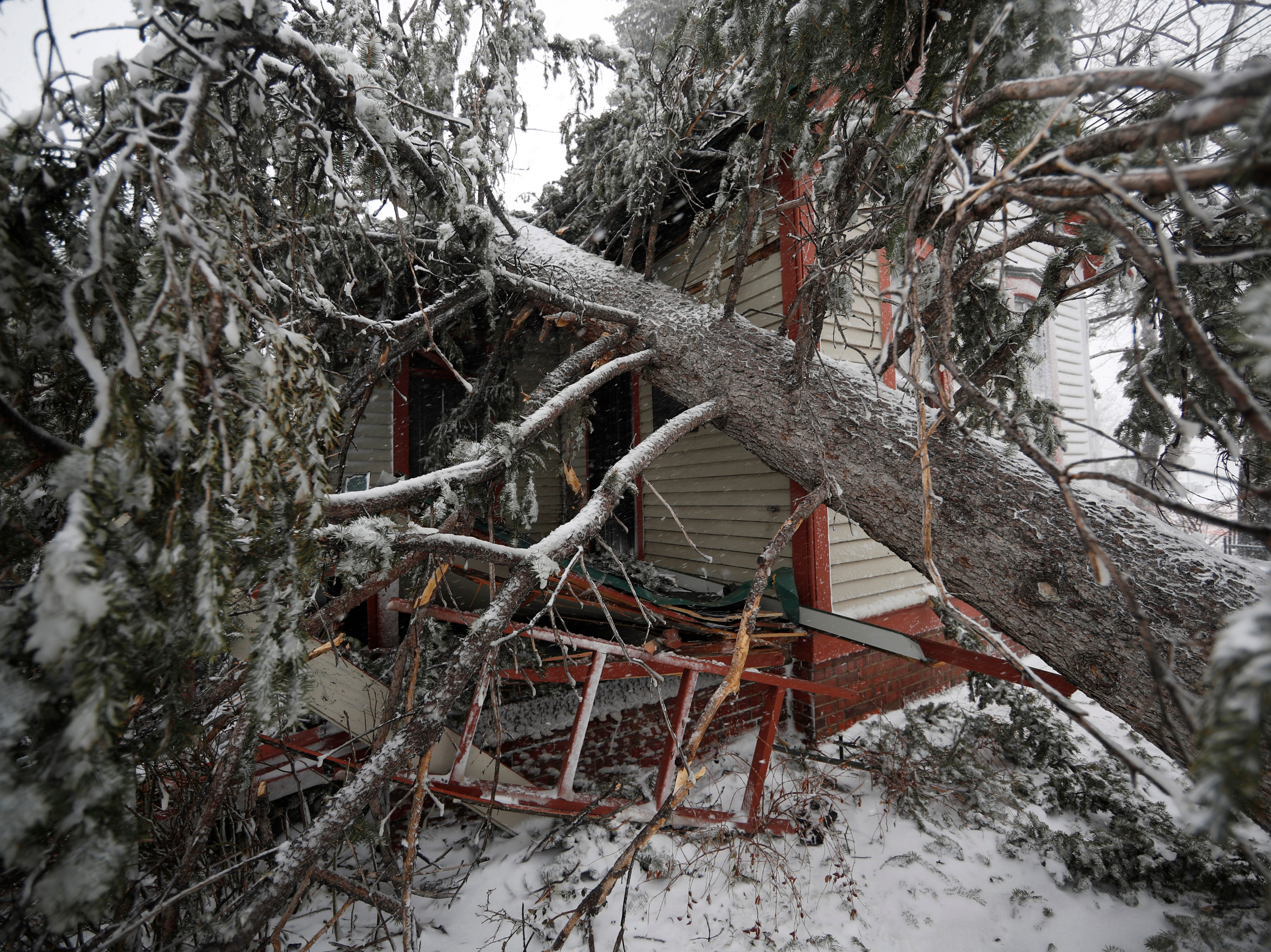 A tree lays on top of the Eugene Field house in Washington Park as a late winter storm packing hurricane-force winds and snow sweeps over the intermountain West Wednesday, March 13, 2019, in Denver.