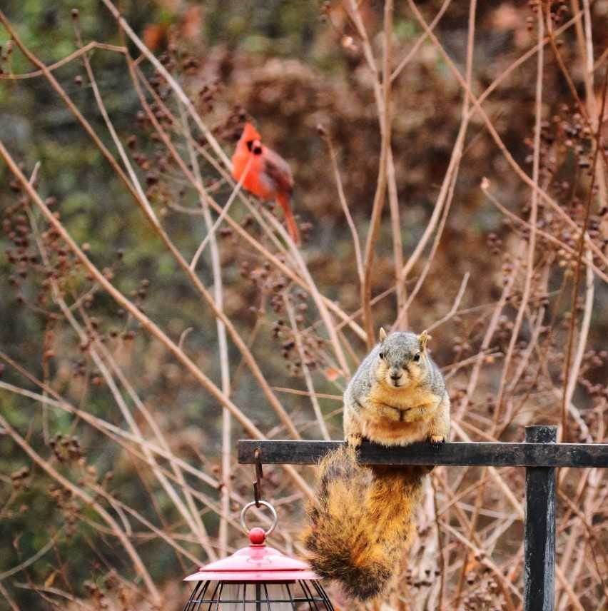 For the Birds: How to fend off squirrels