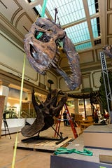 In February the Smithsonian Museum of Natural History posted a peek at a new Deep Time exhibit that will open to the public in June. A highlight will be the Nation's T.rex, discovered in Montana.