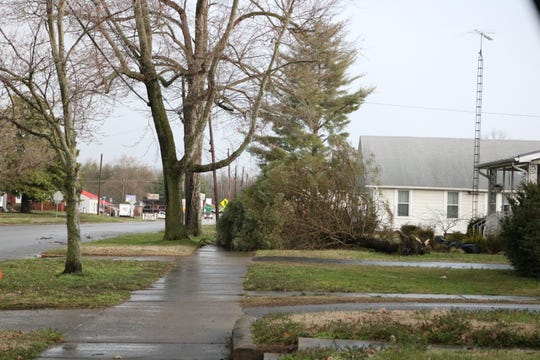 Winds blew down this tree in Sturgis, KY right off Highway 60.