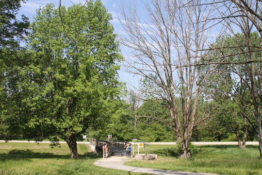 The tree on the left has been treated for emerald ash borer, but the one on the right was not.