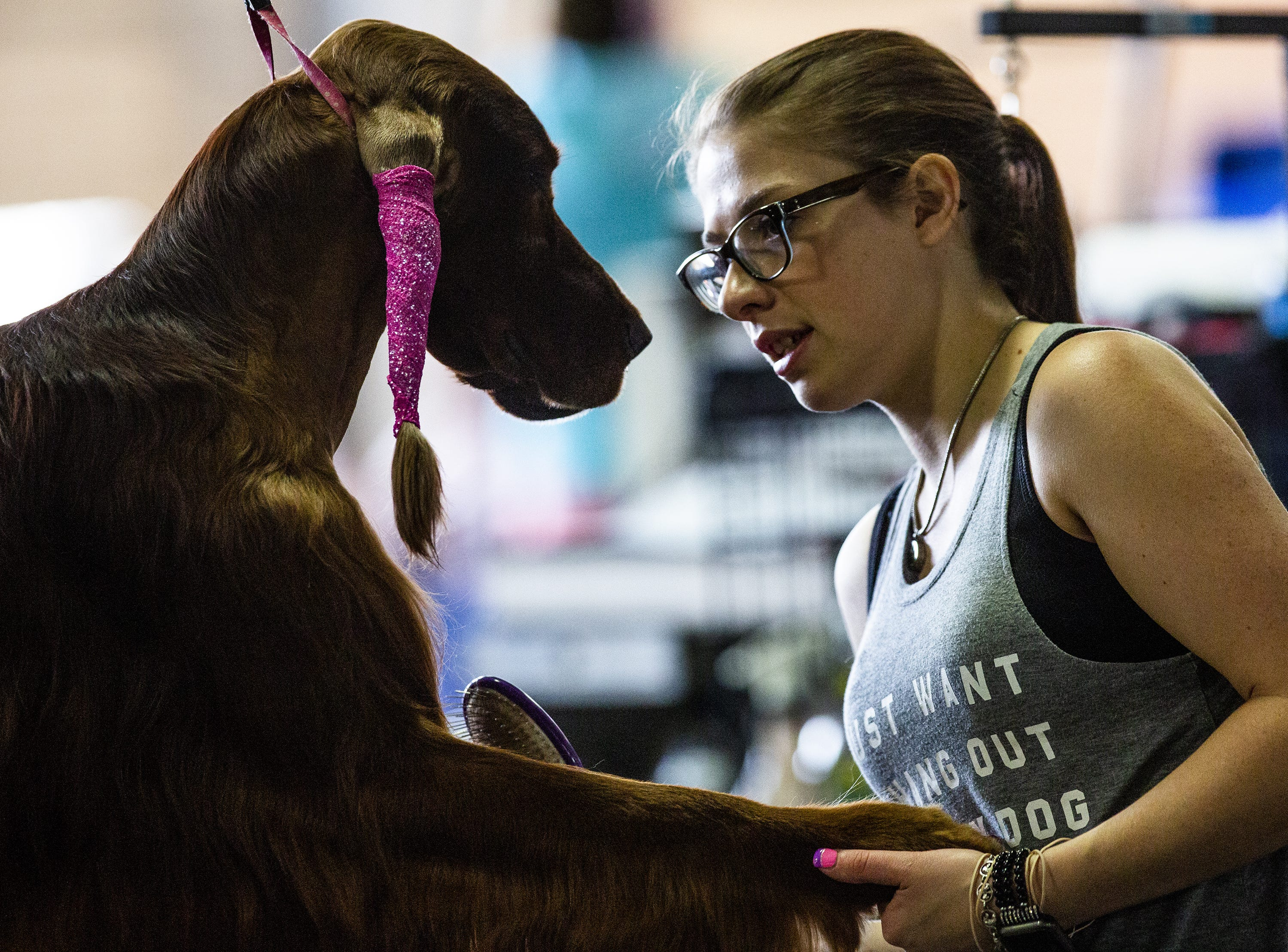 Jamie Lamphier grooms her Irish setter, Ovechkin, before taking him to the ring at the 2019 Kentuckiana Cluster of Dog Shows at the Kentucky Exposition Center. March 14, 2019.