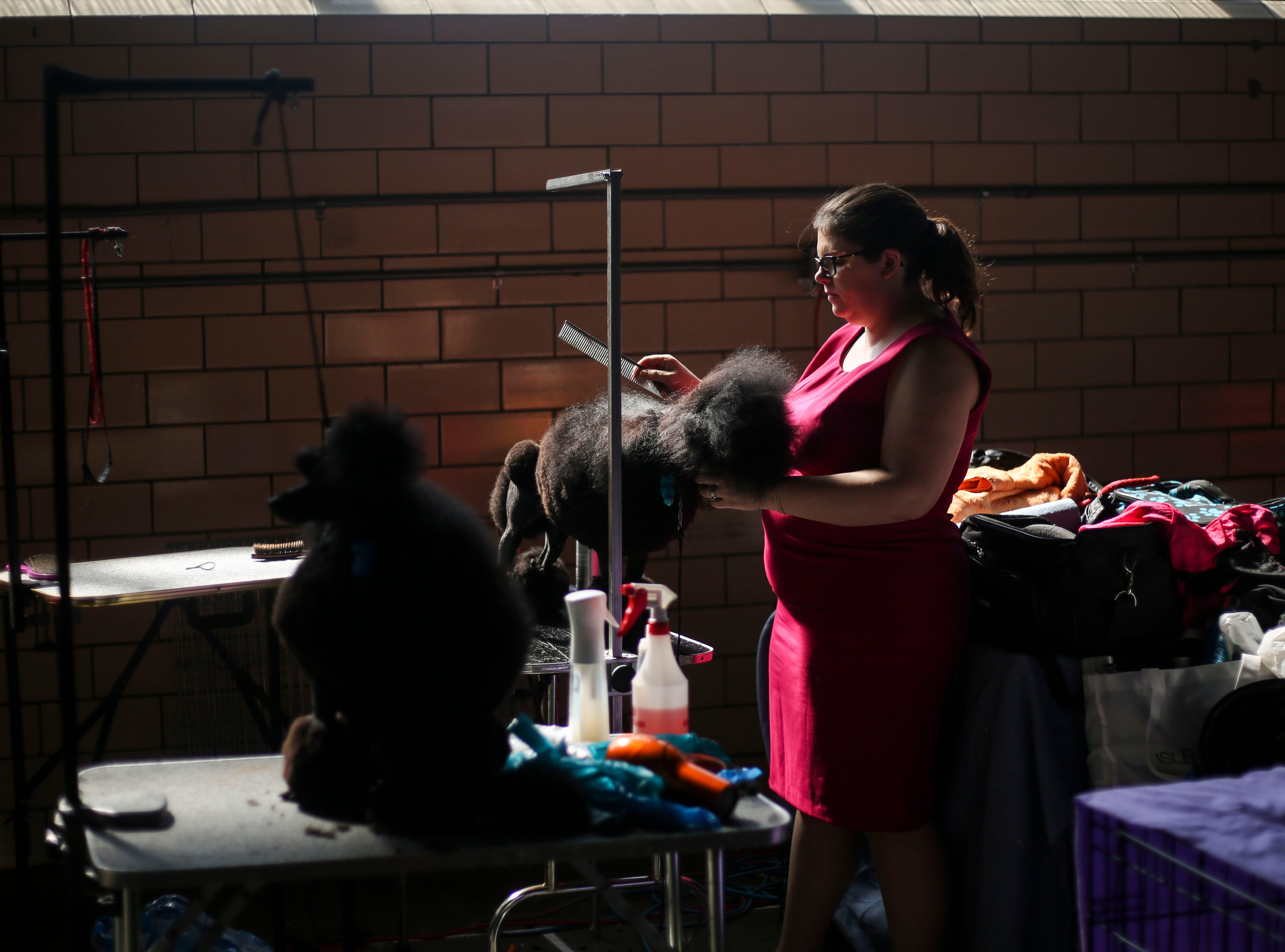 Allison Hardie, from Toronto, Canada, grooms Telsa, a 16 month-old Miniature Poodle, before competition during the Kentuckiana Cluster of Dog Shows at the Kentucky Fair and Exposition Center in Louisville, Ky. on Thursday, March 14, 2019.