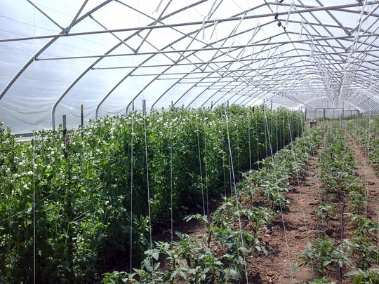 This greenhouse on Three Sisters Community Farm extends the growing season.