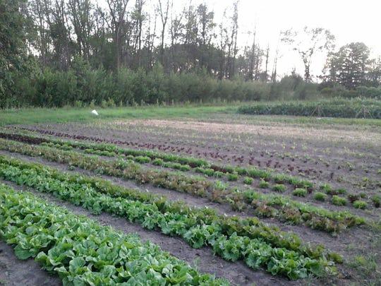Kelly Kiefer's CSA farm is next door to the hobby farm she grew up on.