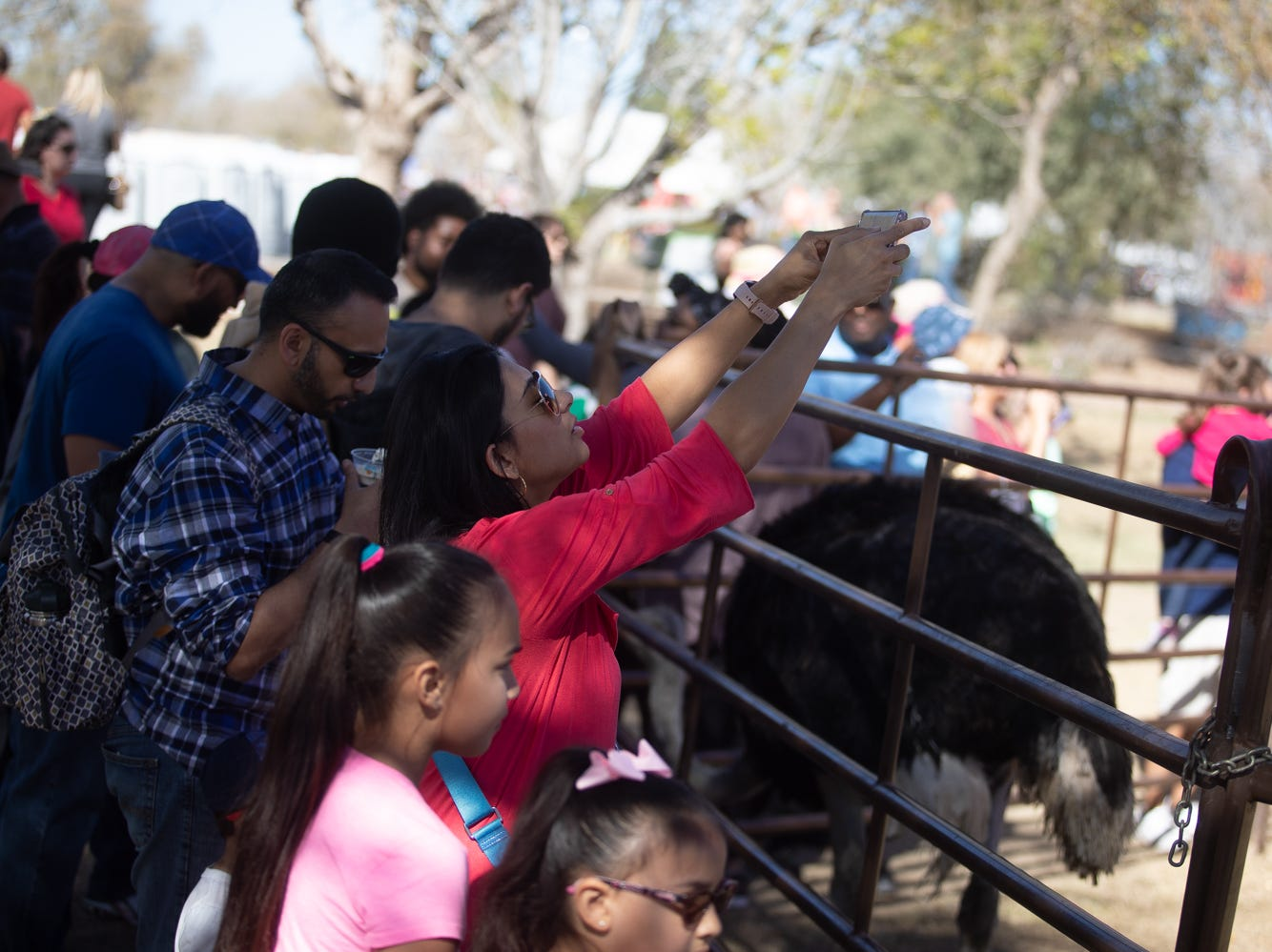 Attendees were eager to snap photos of the ostriches at the Chandler Ostrich Festival on Sunday, March. 10, 2019.