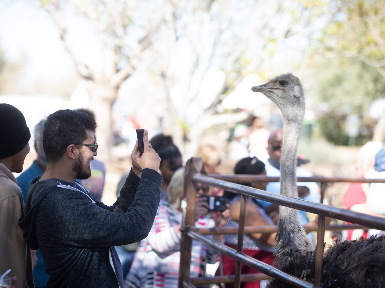 This fella had a good time trying to capture an ostrich at the Chandler Ostrich Festival on Sunday, March. 10, 2019.