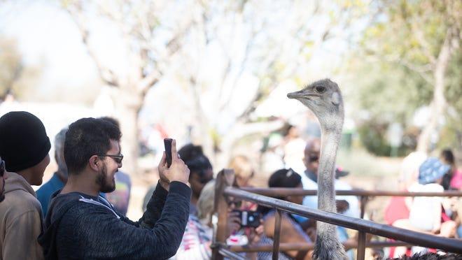 Canceling Or Rescheduling Halloween 2020 Chandler Ostrich Festival 2020 rescheduled for Halloween Weekend