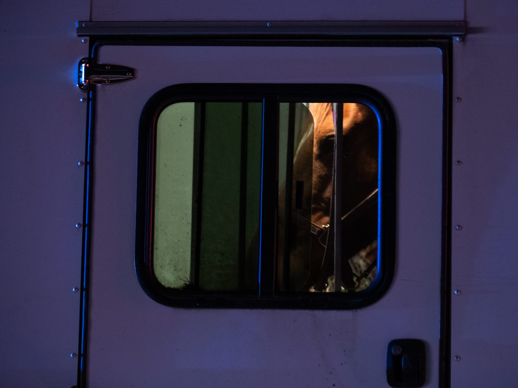 A horse is seen captive in a trailer after it was caught at the scene of a vehicle vs a horse and buggy on the 3400 block of Jefferson Road , Wednesday, March 13, 2019, in Codorus Township. According to fire officials, there were no major injuries to people or the horse involved, which was caught after it ran from the accident.