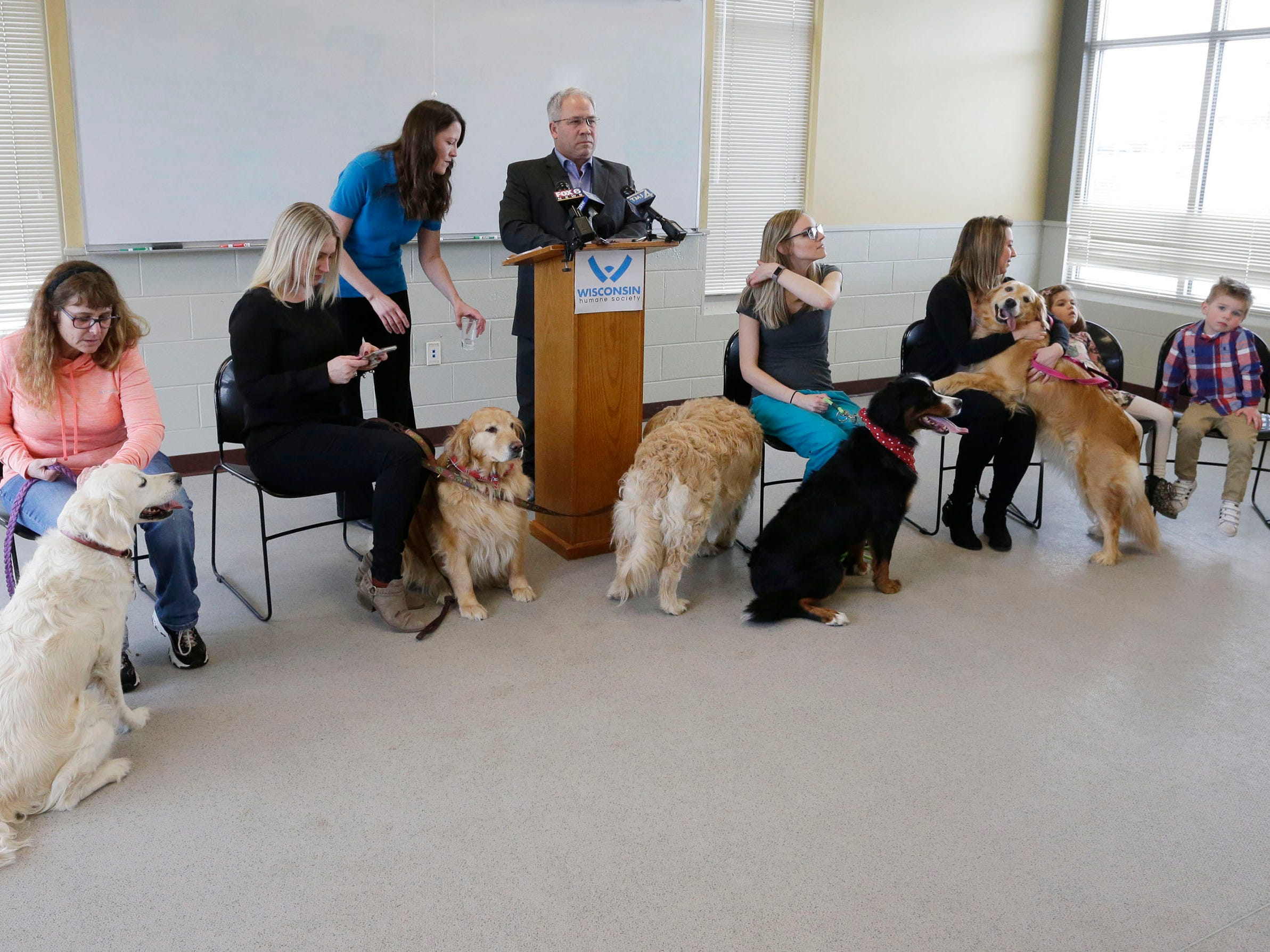 An overall of the Kinship Companions dogs press conference at the Wisconsin Humane Society Ozaukee Campus, Thursday, March 14, 2109, in Saukville, Wis. The dogs, who will all eventually be adopted out, were part of the 36 live dogs that were seized in 2017 from Kinship Companions, a kennel that has been since shut down.