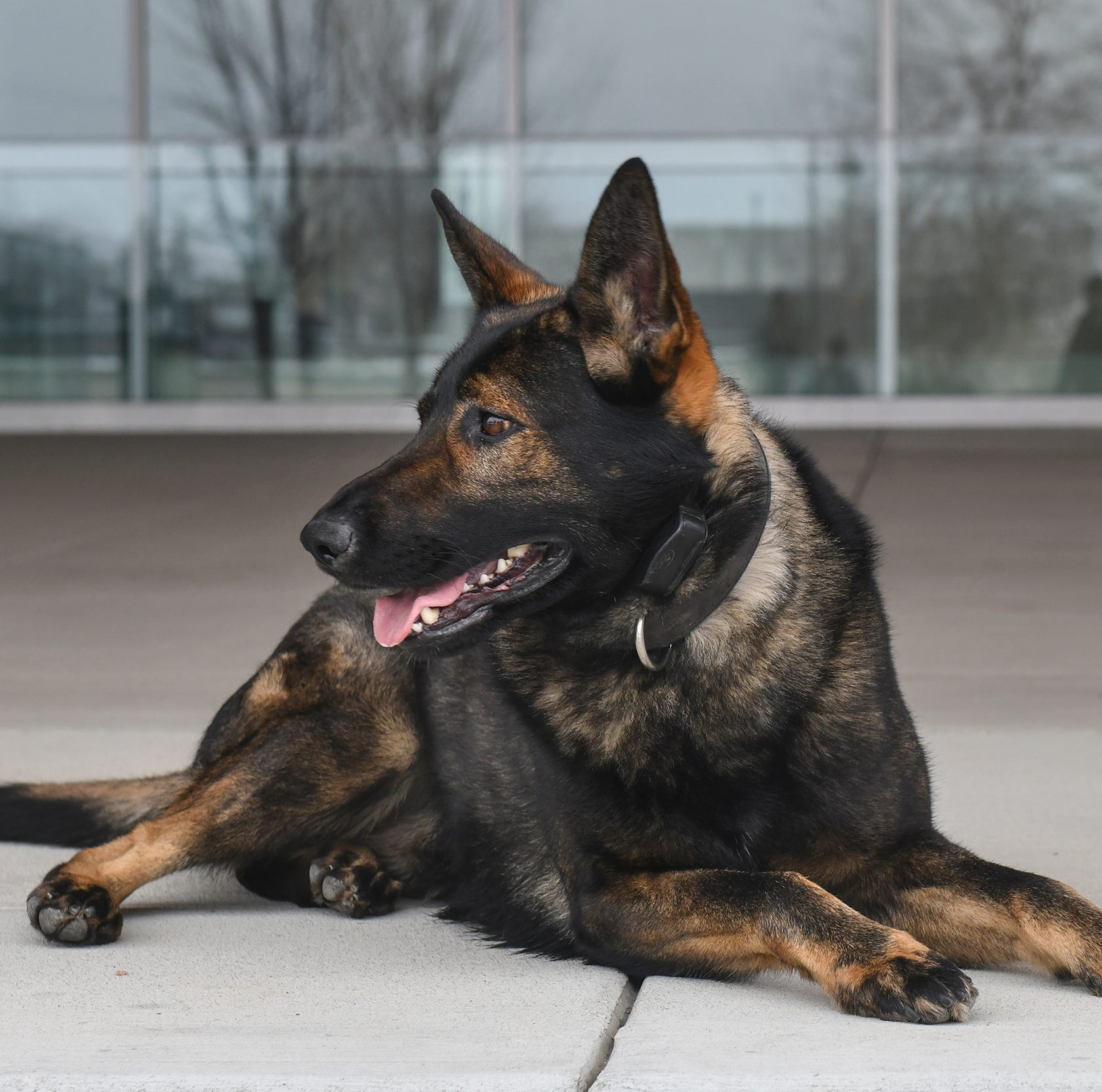 St. Cloud police K-9s deployed hundreds of times in 2018, found 16 pounds of drugs