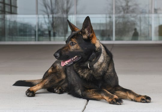 St. Cloud Police K-9 Riggs.