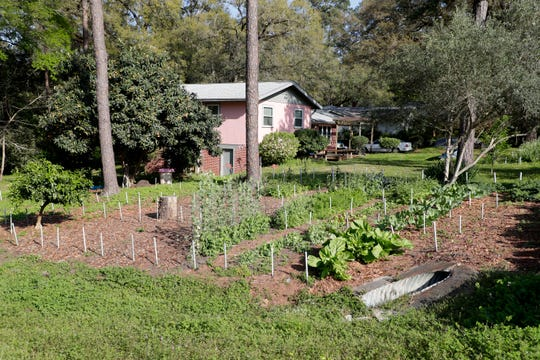 A garden in the front yard of Sue Wiley's home in Tallahassee, Fla. Thursday, March 14, 2019. The city of Tallahassee does not prohibit growing vegetables in the front yards of people homes.