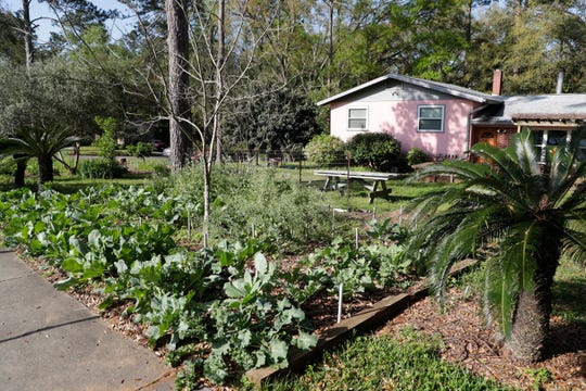 A garden in the front yard of Sue Wiley's home in Tallahassee, Fla. Thursday, March 14, 2019.