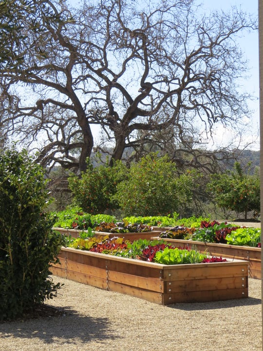 Raised beds planted with lettuces and herbs are seen at The Farmhouse, the newly opened epicurean events center at the Ojai Valley Inn.