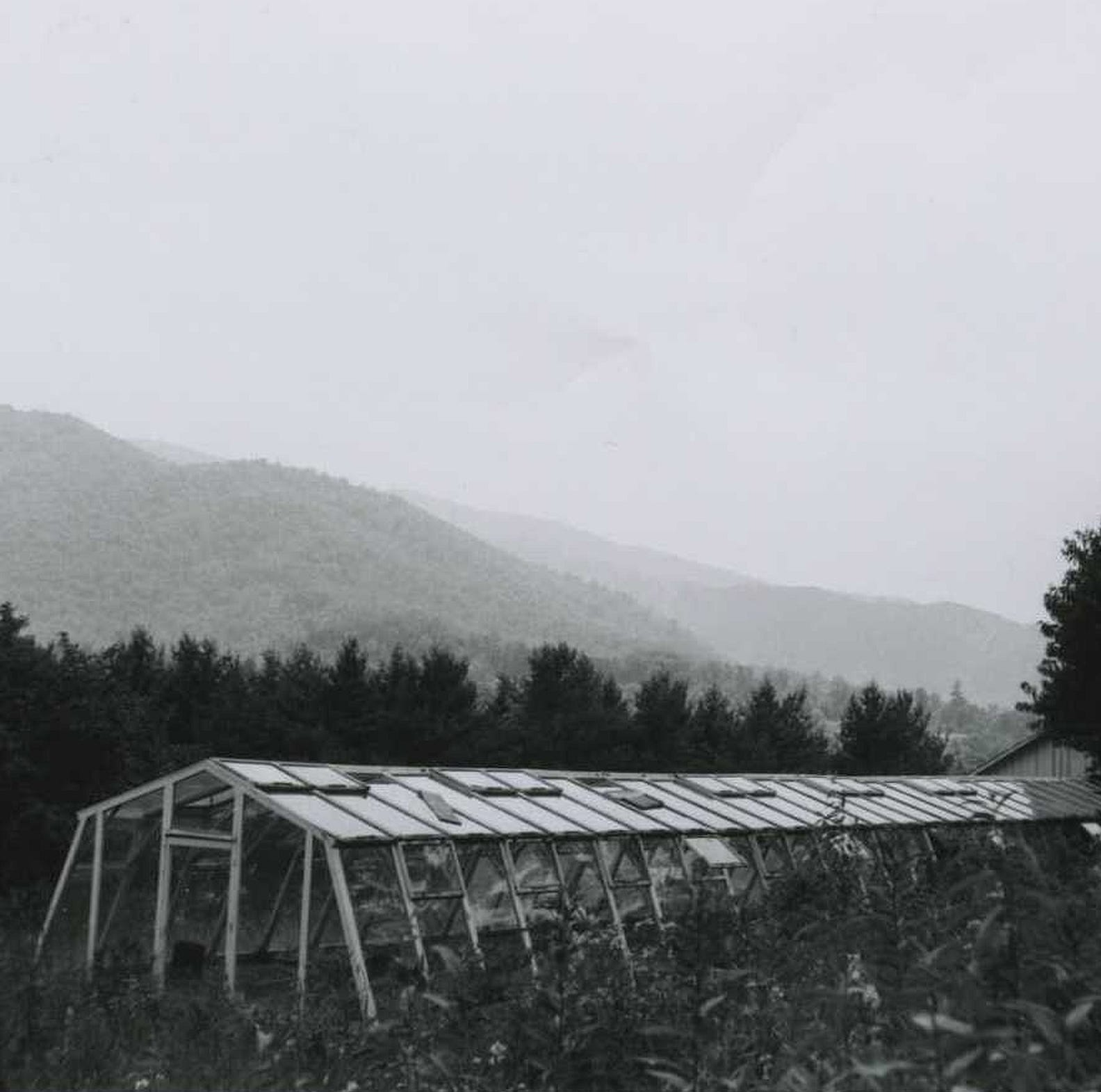 Museum uncovers story of how a greenhouse delayed the 1959 sale of the estate InTheOaks
