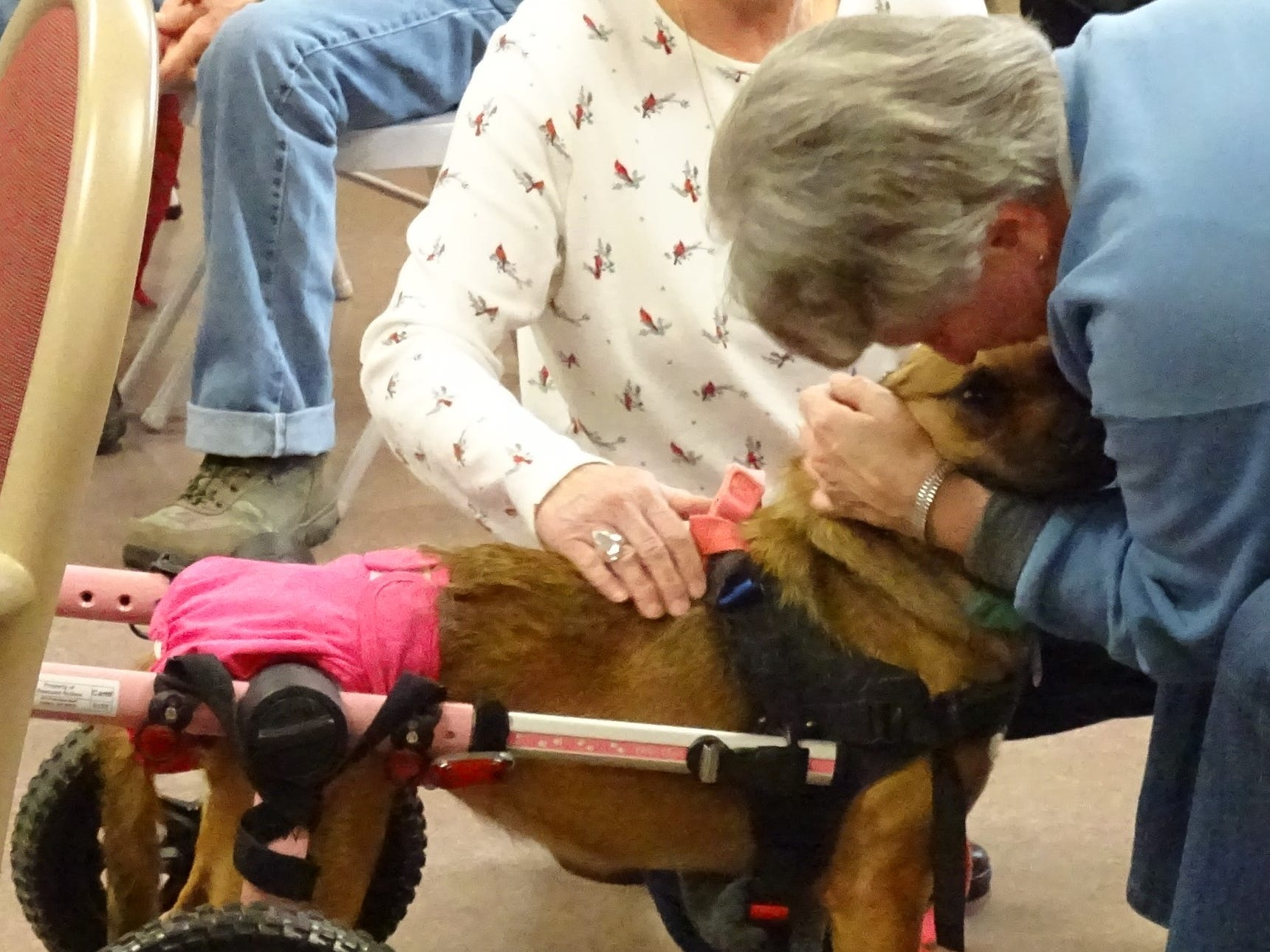 John Lizotte of Rescued Rollers - Wheelchairs for Dogs and his dog, Laura, gave a presentation about the non-profit and how to care for dogs with disabilities at the Crawford County Council on Aging on Friday.