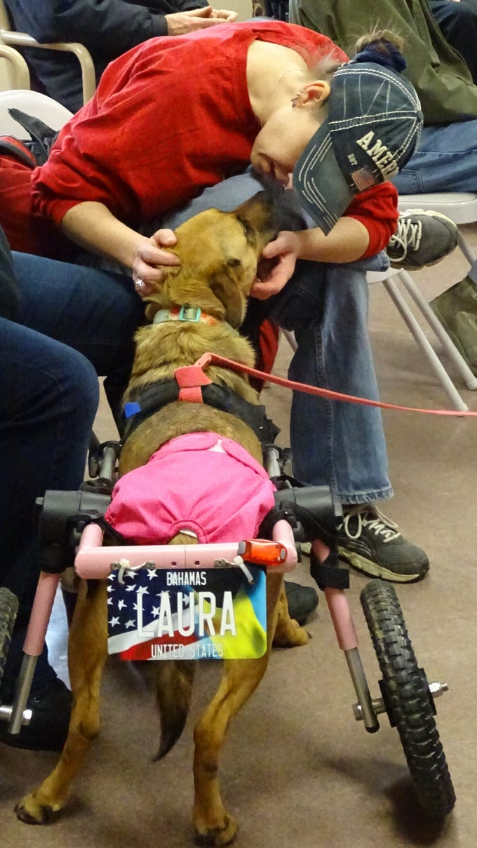 Laura, who can't use her rear legs properly due to a problem with her spine, greets Emily Stoney during a Rescued Rollers presentation Friday at the Crawford County Council on Aging, 200 S. Spring St.