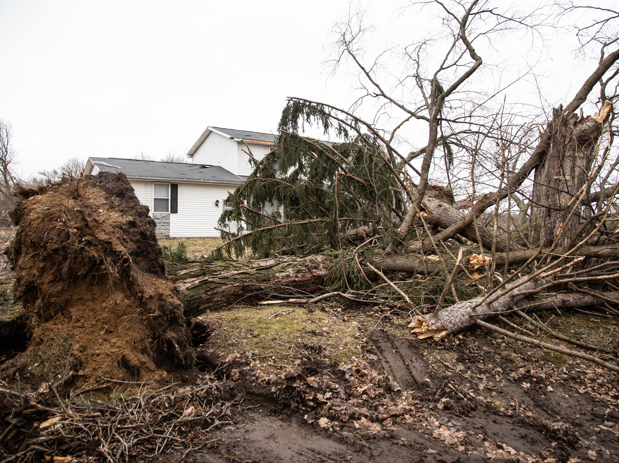 Uprooted trees are seen after a tornado came through Shiawassee County overnight on Newburg Rd. in Bancroft on Friday, March 15, 2019.