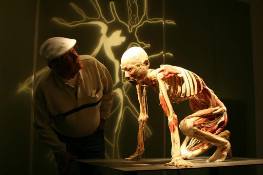 "A man taking look at a piece that's a part of the ""Bodies Revealed"" exhibition toured by Premier Exhibitions, Inc. The exhibition will open at the Grand Rapids Public Museum on November 16, 2019."
