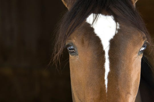 A horse show will be held this weekend at DREAM Park, Logan Township.