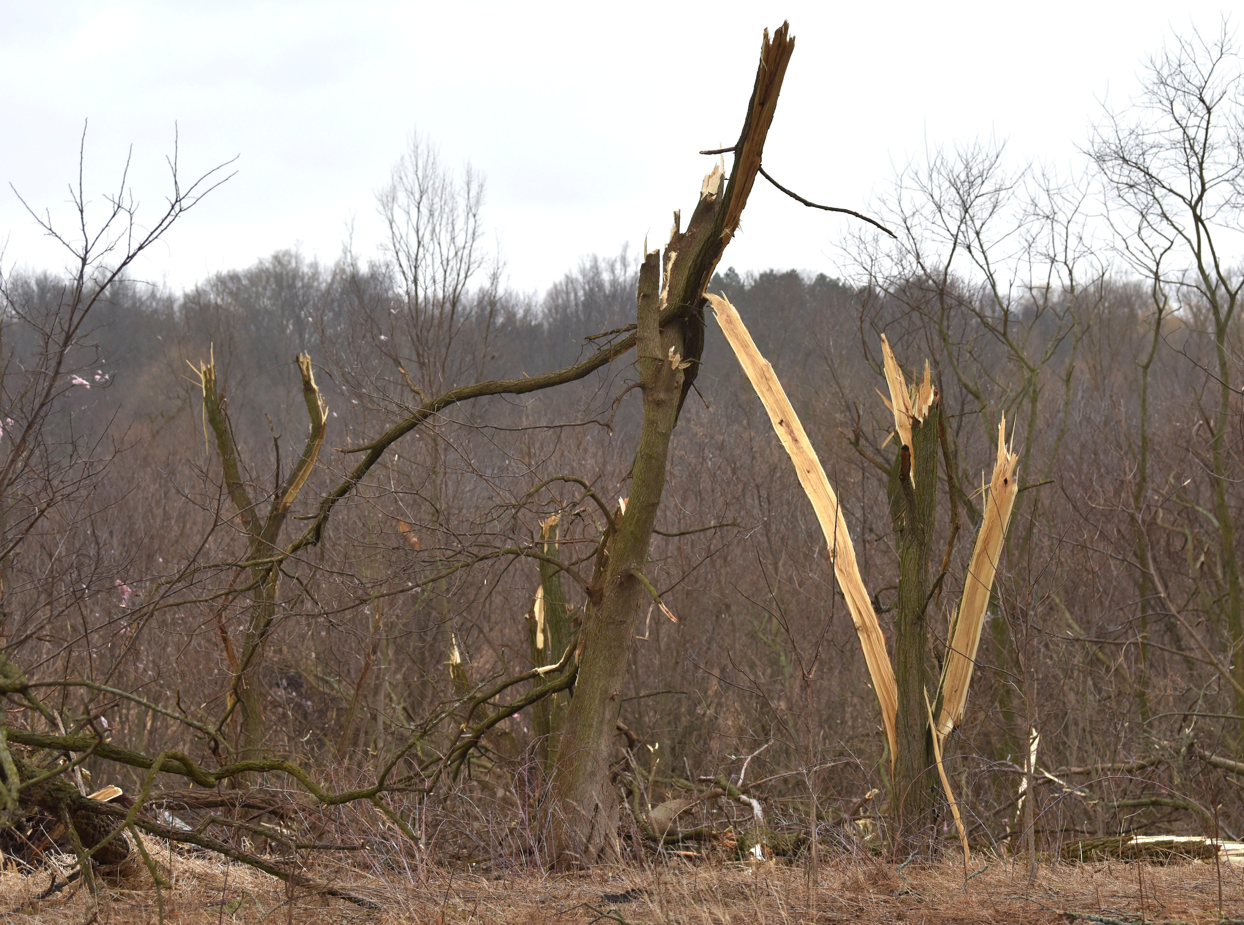 Some trees are snapped in half and other trees are whole along Newburg Rd. near Foundry Rd. in Vernon Twp.