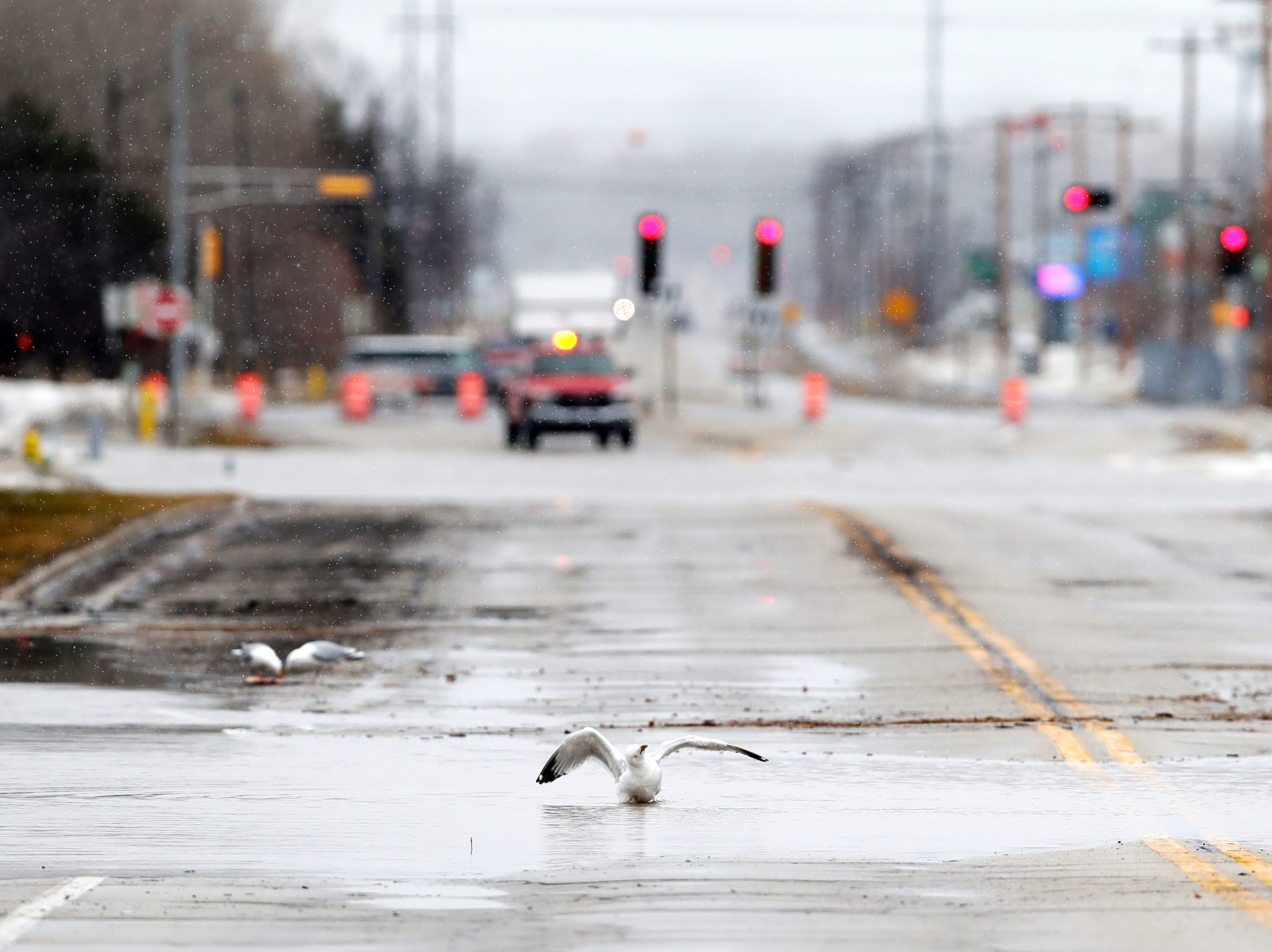 A seagull sits in a flooded portion of Allouez Ave due to East river floodwaters on Friday, March 15, 2019 in Bellevue, Wis.