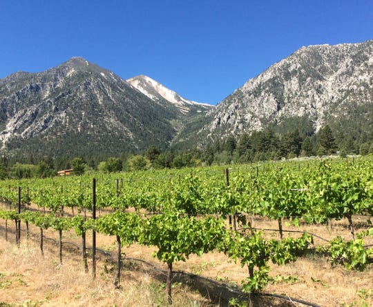 Basin and Range Cellars of Reno makes all its wines from fruit grown on its 9-acre vineyard outside Minden. Elevation? 5,240 feet.