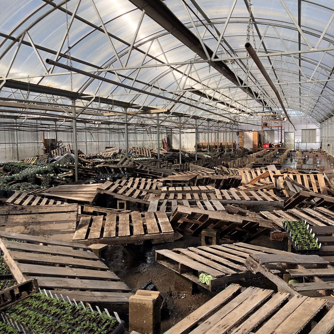 Cliff Avenue Greenhouse faced explosion threat, now 'heartbreaking' flood damage