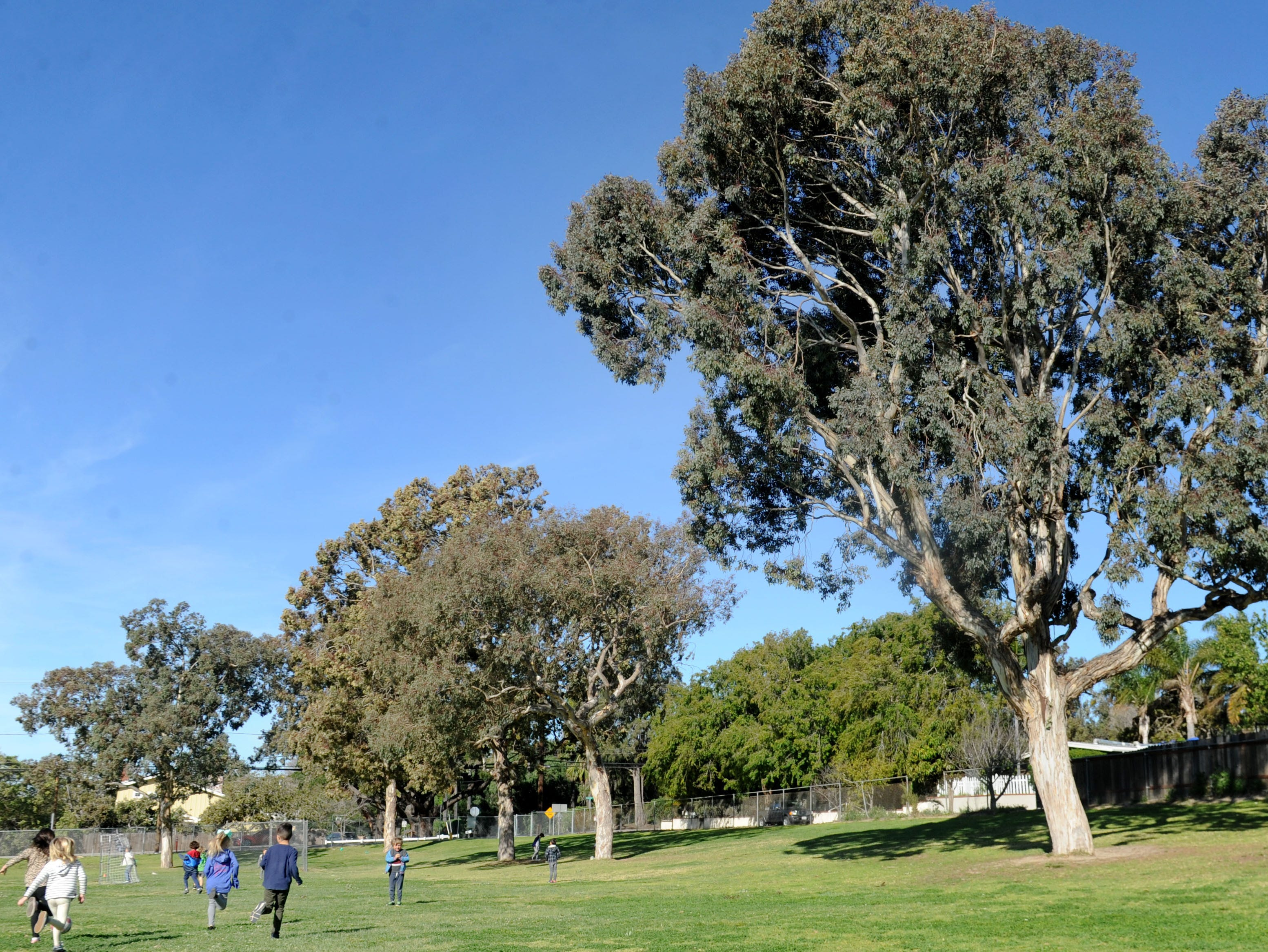 Students at Camarillo Heights School run and play in the big trees in the school's playing fields.The school is the oldest operating school that has always been part of the Pleasant Valley School District, which is celebrating its 150th anniversary at a celebration later this month.