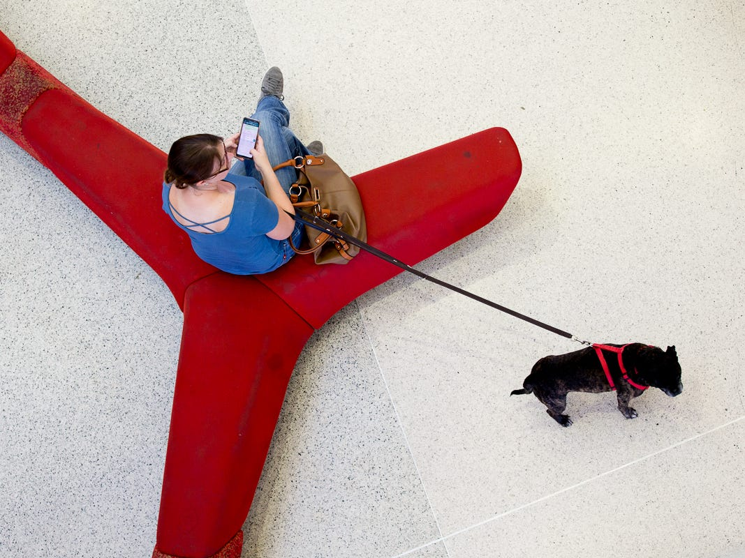 Something catches the eye of this pup as his owner waits for a flight at Miami International Airport on Feb. 23, 2019.