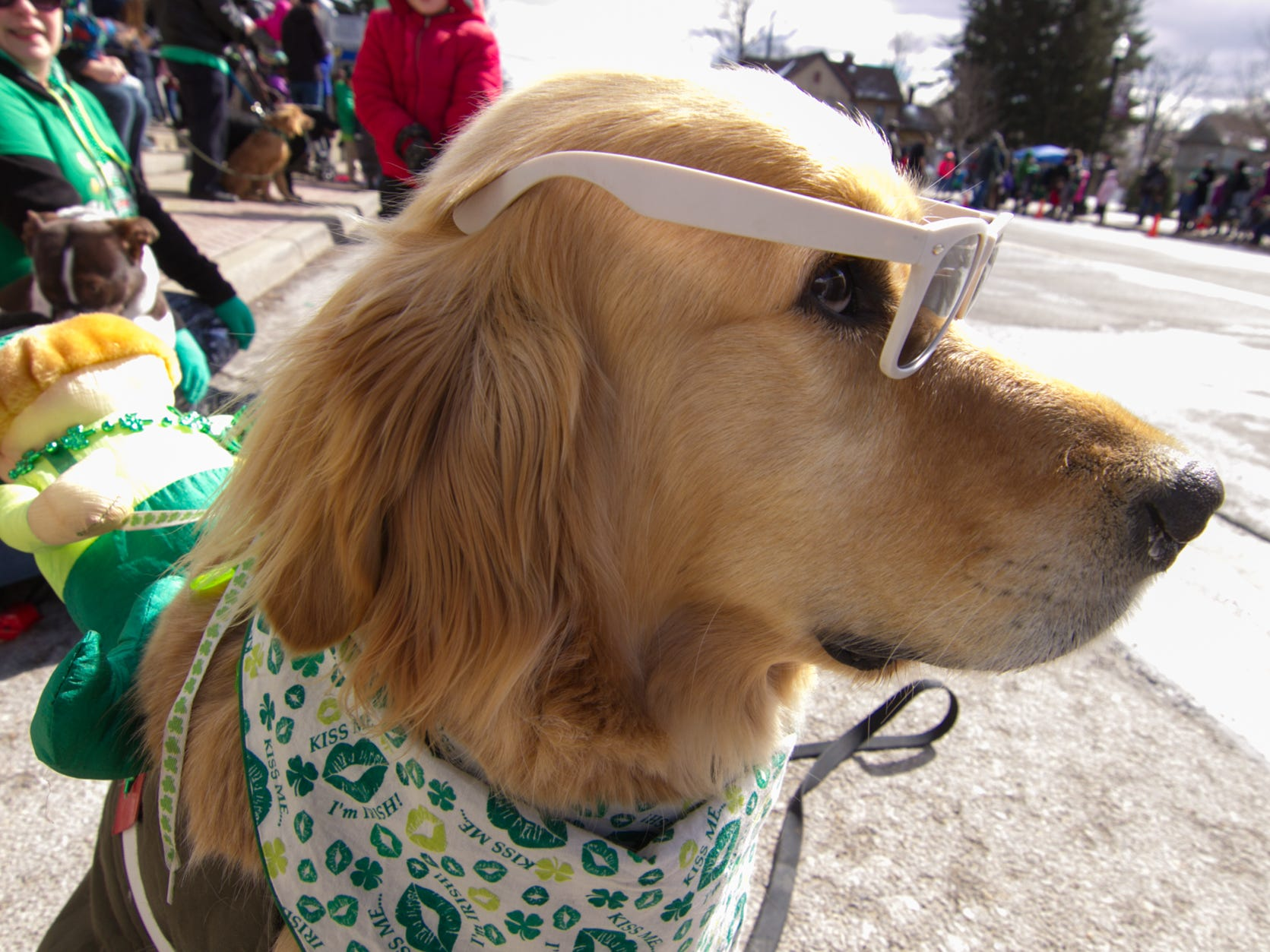 7-year-old Billy Palmer, a golden retriever, dresses with a leprechaun riding on his back at the Pinckney St. Patrick's Day parade Saturday, March 16, 2019.