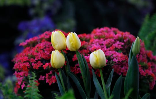 You can think spring (and gardens) at the 95th annual Realtors Home & Garden Show March 22-31 at State Fair Park.