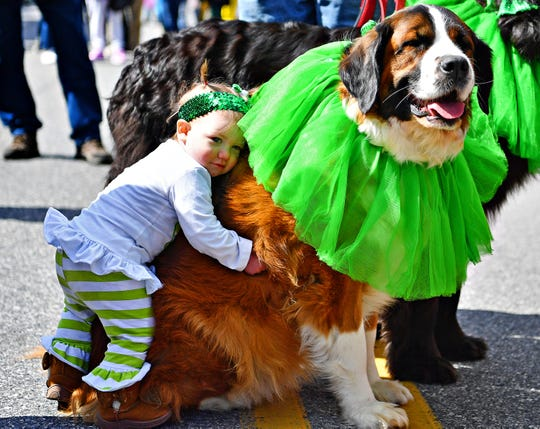 Ellie Mitchell, 1, of Hampstead Md., hugs KPETS therapy dog Heidi, 6, who is a Saint Bernard mix, while waiting in the staging area with her mom Brittany Mitchell, of the York City Derby Dames prior to the 36th Annual York St. Patrick's Day Parade advances down Market Street in York City, Saturday, March 16, 2019. Dawn J. Sagert photo