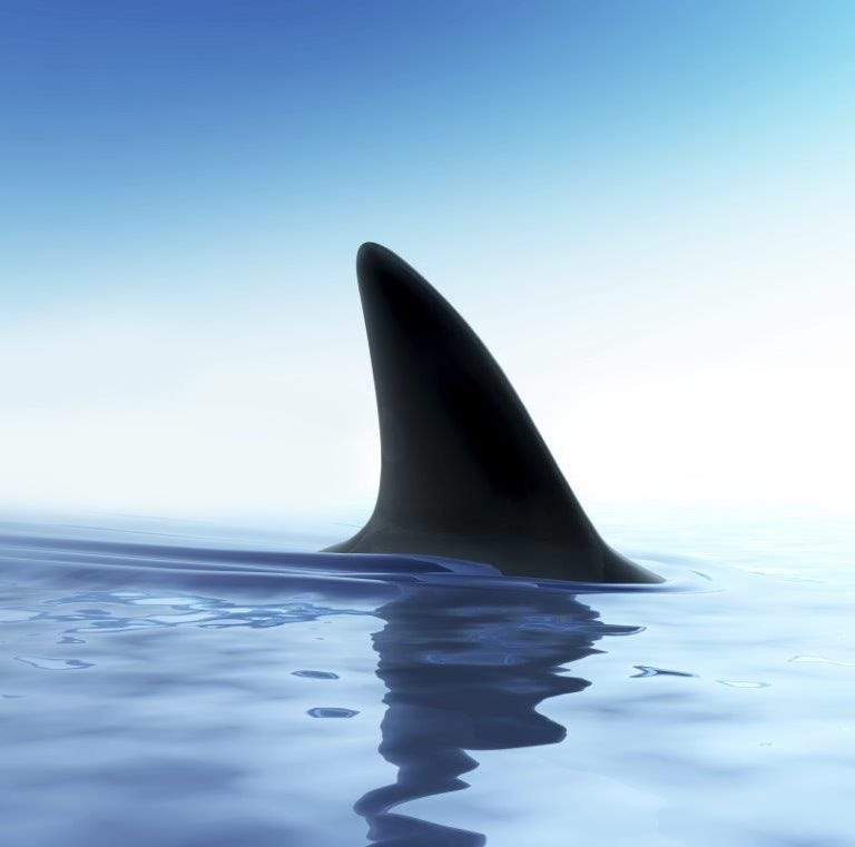 Fisherman: New Jersey shark fin ban bill punishes wrong people