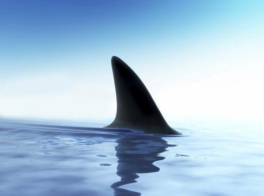 A shark fin.