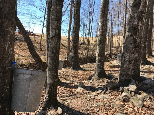 Eagle's Sugar Camp offers tours during the 61st annual Virginia Highland Maple Festival on Sunday, March 17, 2019.