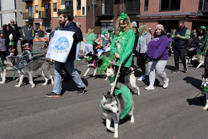 Dogs with Husky Huddle and Malamute Mingle Minnesota strut their stuff in the St. Patrick's Day parade, March 17, 2019.