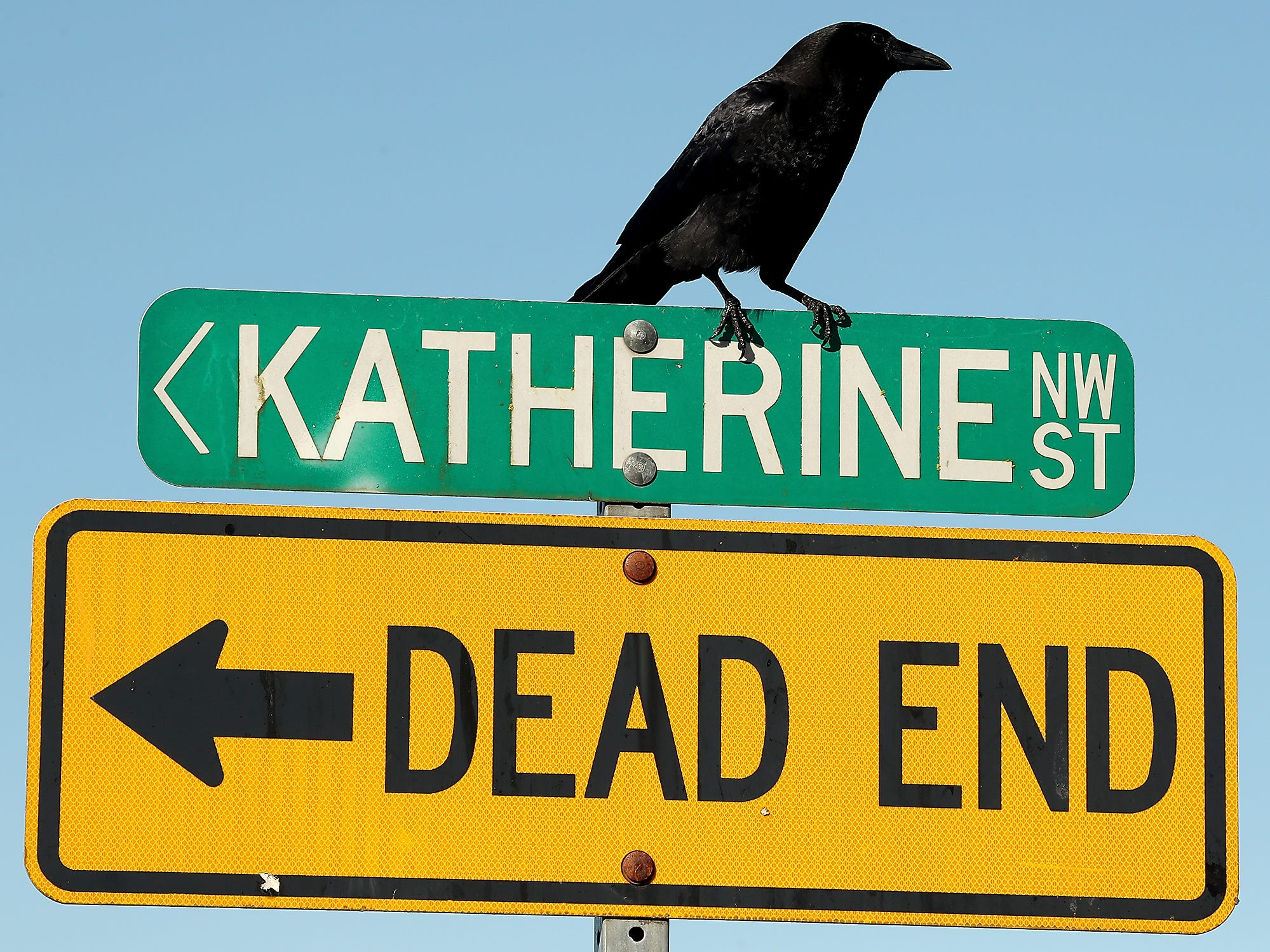 A crow perches atop the signs at the Tracyton Boat Launch in Bremerton on Monday, March 18, 2019.