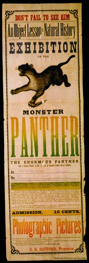 A poster touts an exhibit of the last catamount, or mountain lion, seen in Vermont, which was shot and stuffed in 1881.