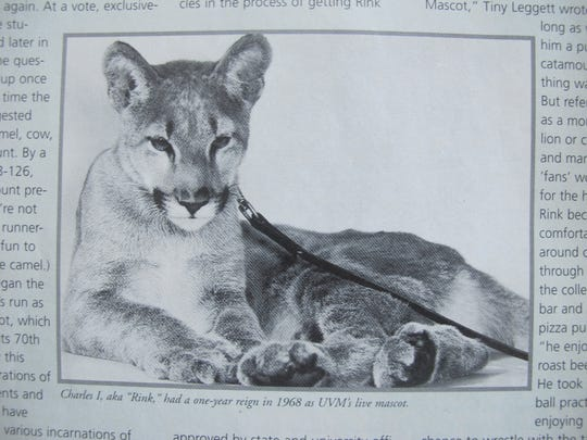Rink, the catamount (or panther, or cougar), was briefly UVM's real-live mascot in 1968, as seen in this photo published in Vermont Quarterly on Jan. 21, 2015