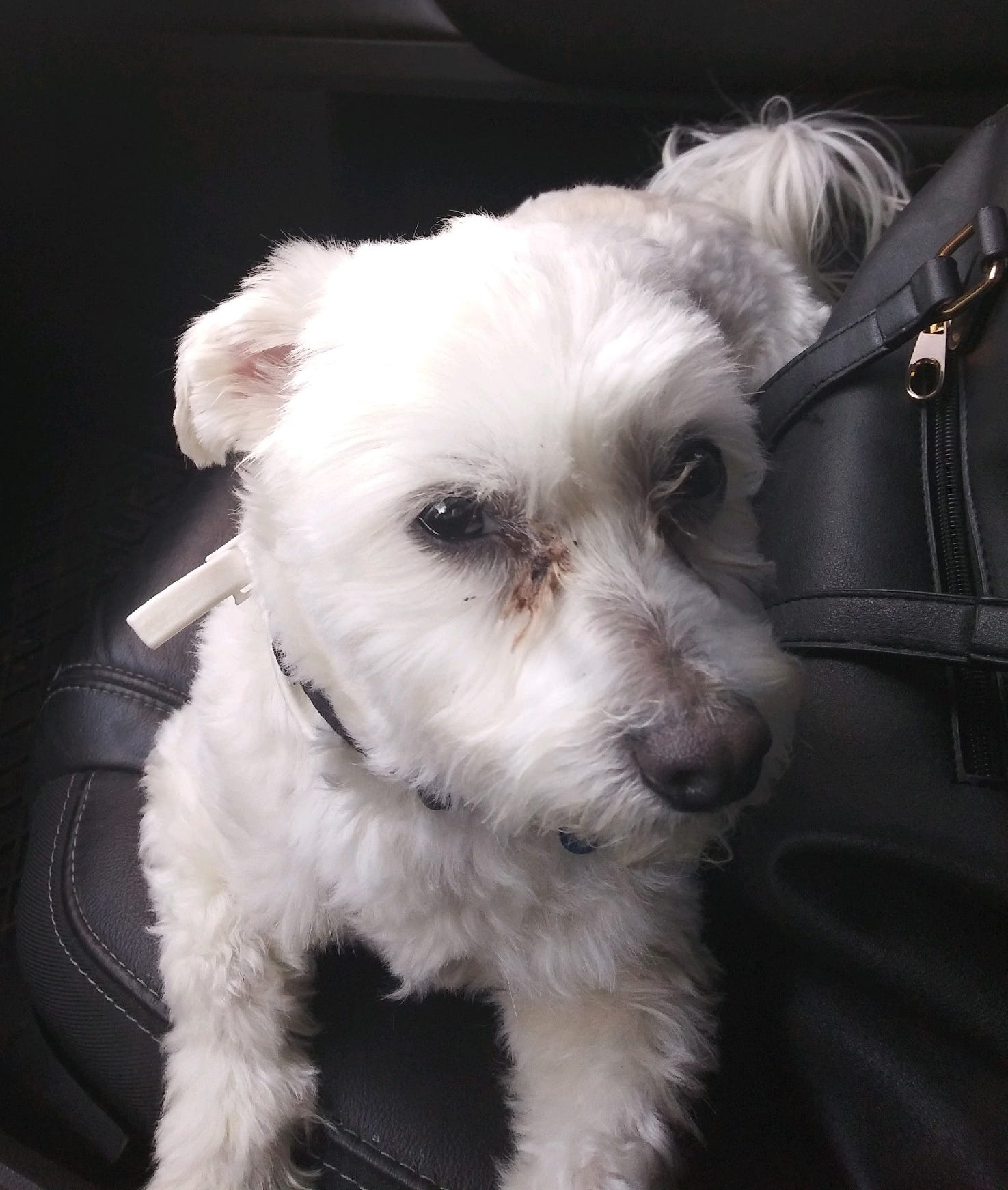 An ownership dispute over this Maltese named Jake finally ended with the dog being returned to the woman that his microchip was registered to, despite the lack of microchip laws in Tennessee.