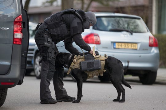 Dutch counter terrorism police install a camera on a sniffer dog as they prepare to enter a house after a shooting incident in Utrecht, Netherlands, Monday, March 18, 2019.