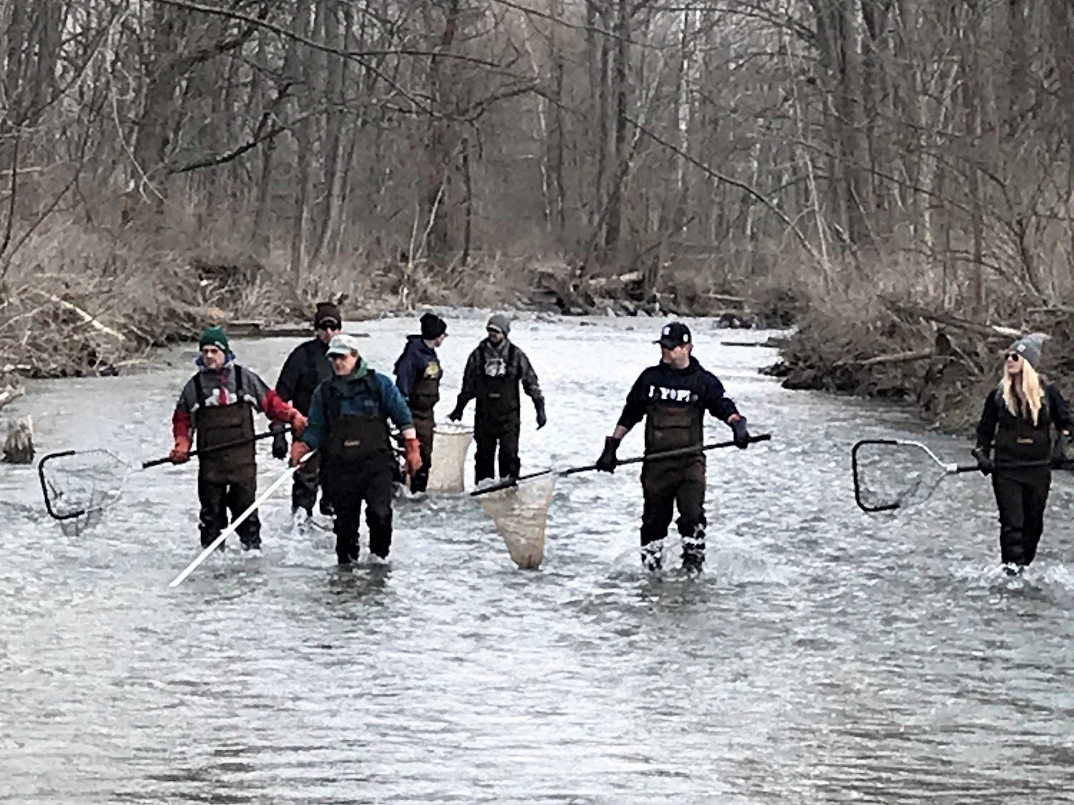 A team from the state Department of Environmental Conservation wades up Catharine Creek in Montour Falls on Monday looking for spawning rainbow trout.