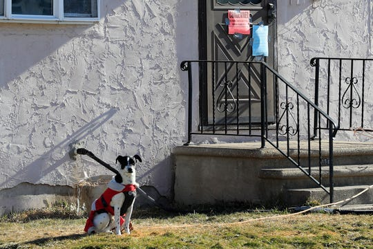 A dog sits outside a flood damaged house near the East River on Monday, March 18, 2019 in Green Bay, Wis.