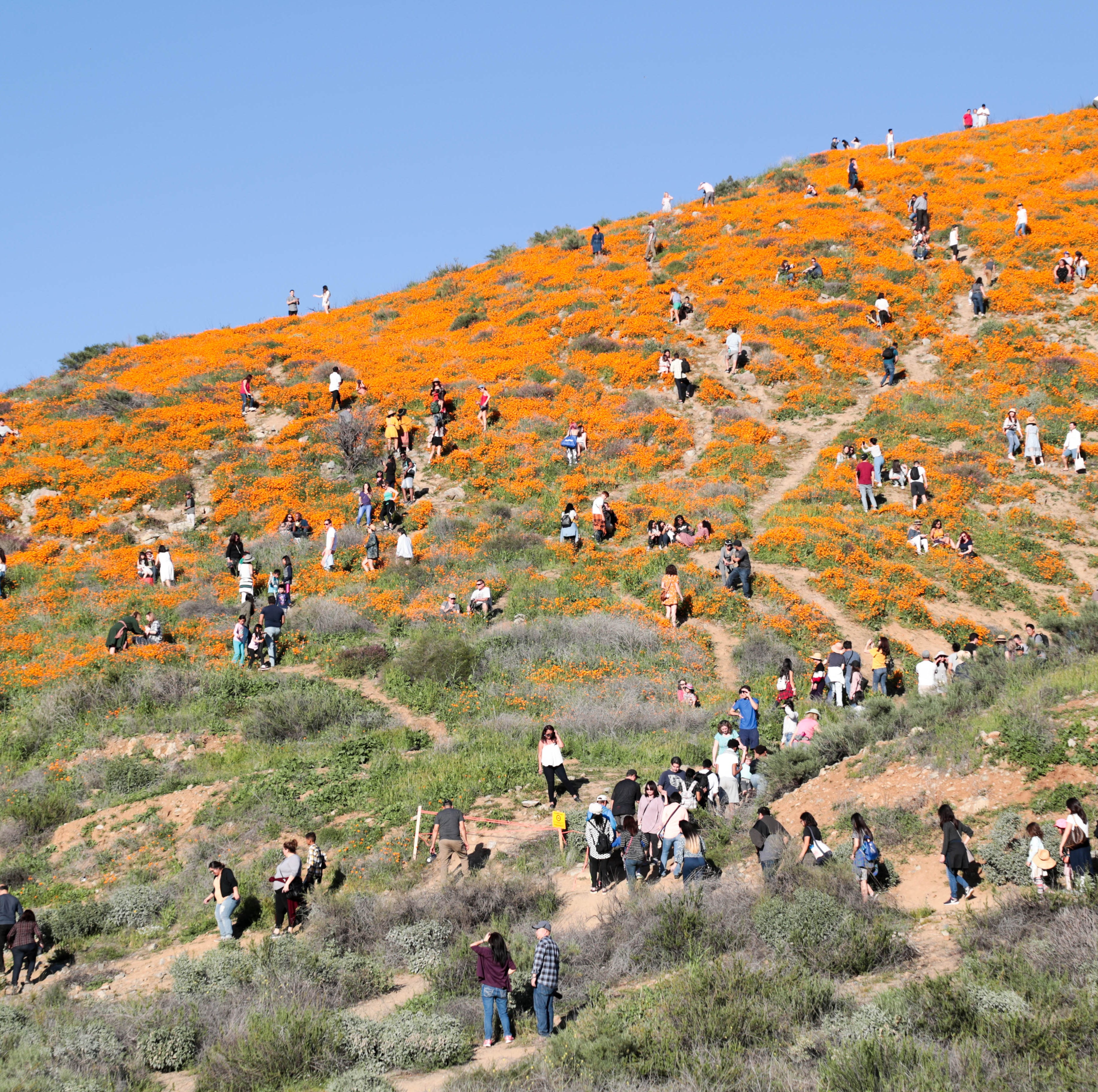 Before you go Instagram the California poppies, let's talk about safety 101