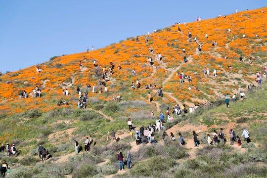 Poppy fields in Lake Elsinore, California, shut down to public amid Super Bloom apocalypse